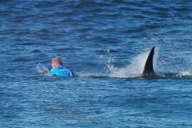 TOPSHOTS-SAFRICA-AUSTRALIA-SURF-ANIMAL