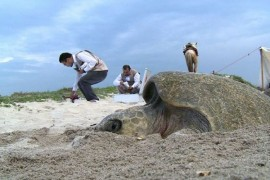 turtle-drone-protection